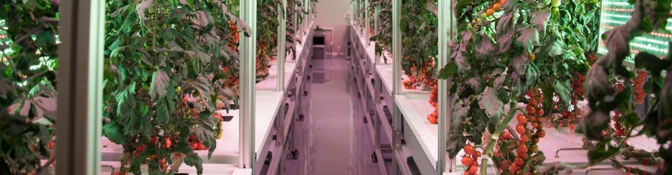 AEtrium Guardian Aeroponic Grow Environment