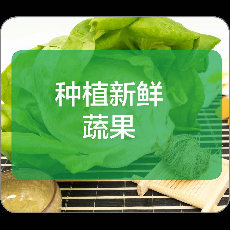 种植新鲜蔬果