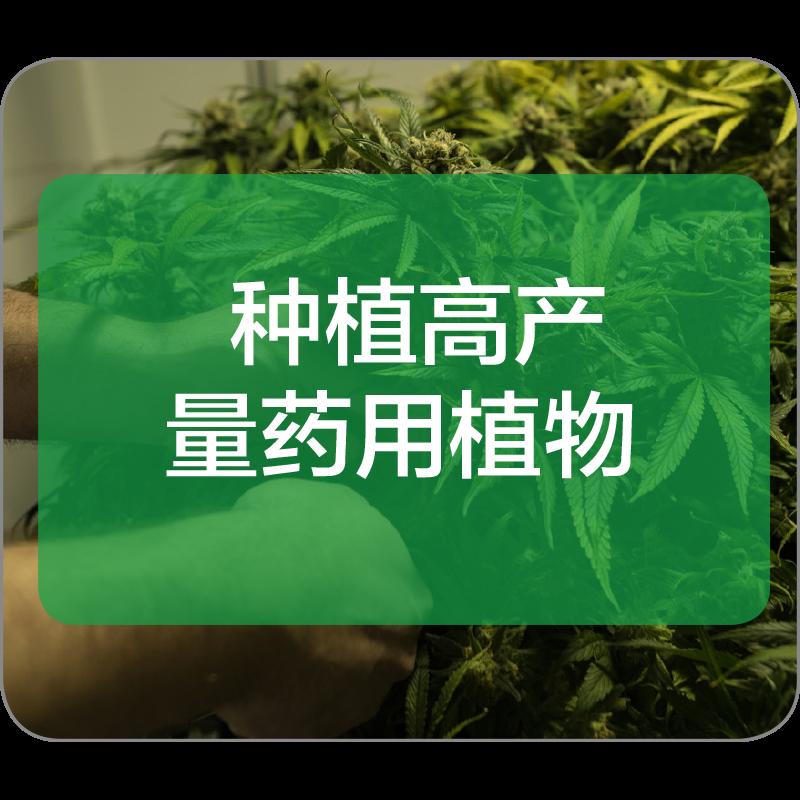 种植高产量药用植物