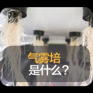 为什么气雾培是最佳的种植方法?