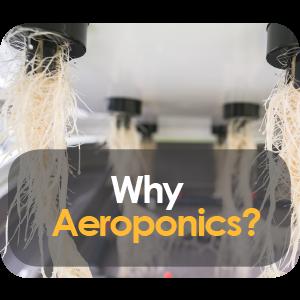 Why Is Aeroponics The Best Growing Method?
