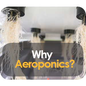 Why Is Aeroponics The Best Growing Method?