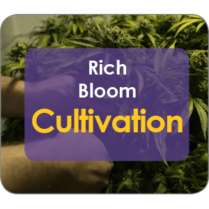Grow Rich Bloom Cultivation