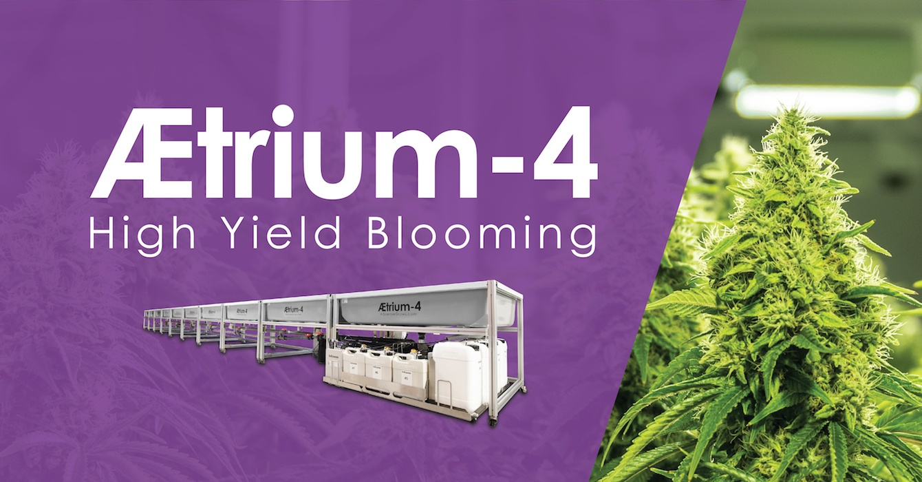 AEtrium-4 Hydroponic System Blooming