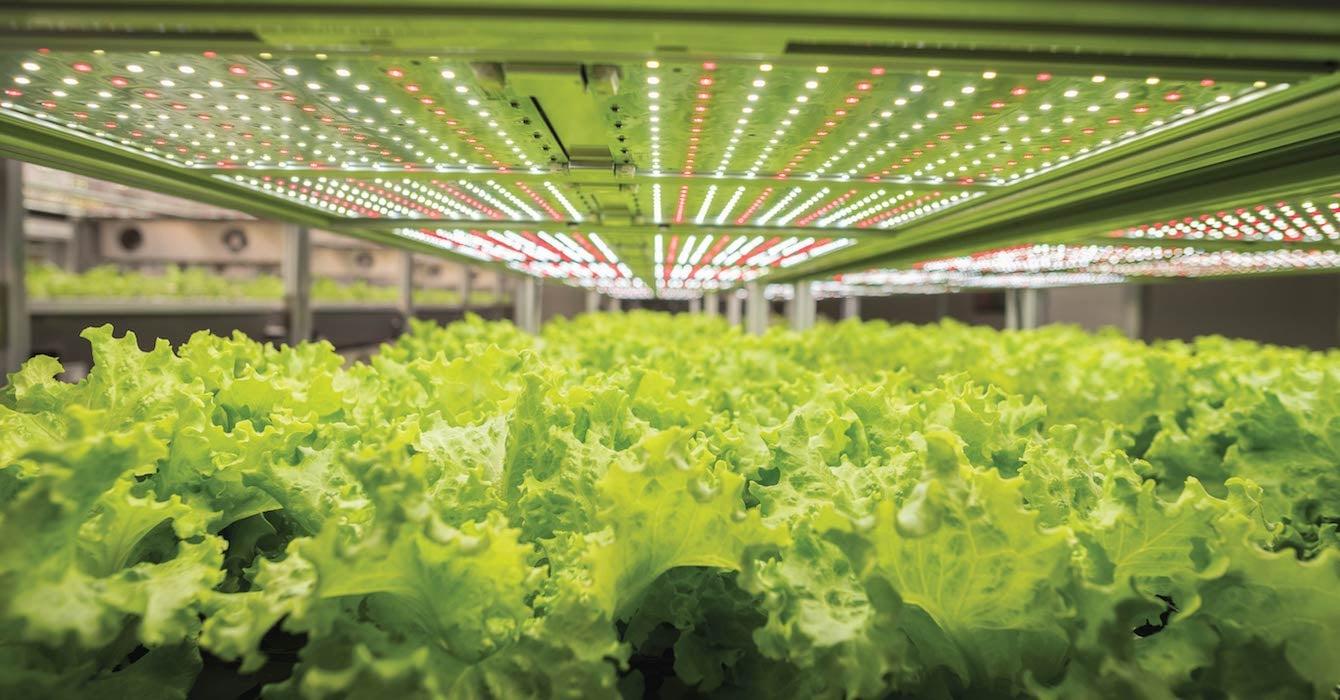 AEtrium SmartFarm Lettuce
