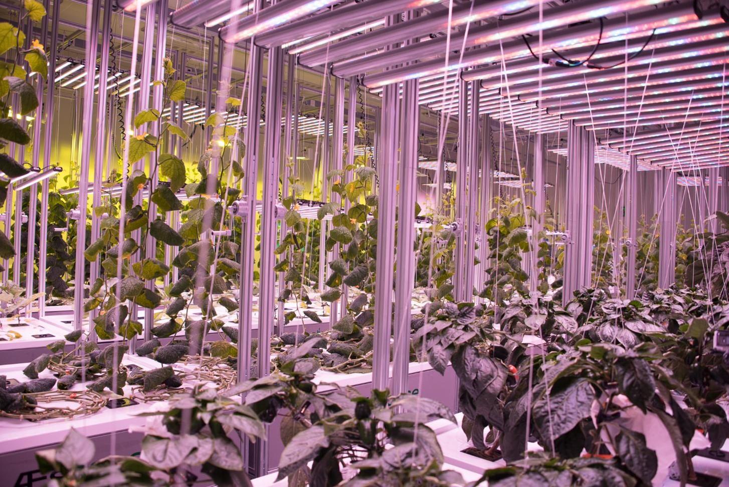 AEtrium 4 Vegetables 2.jpg