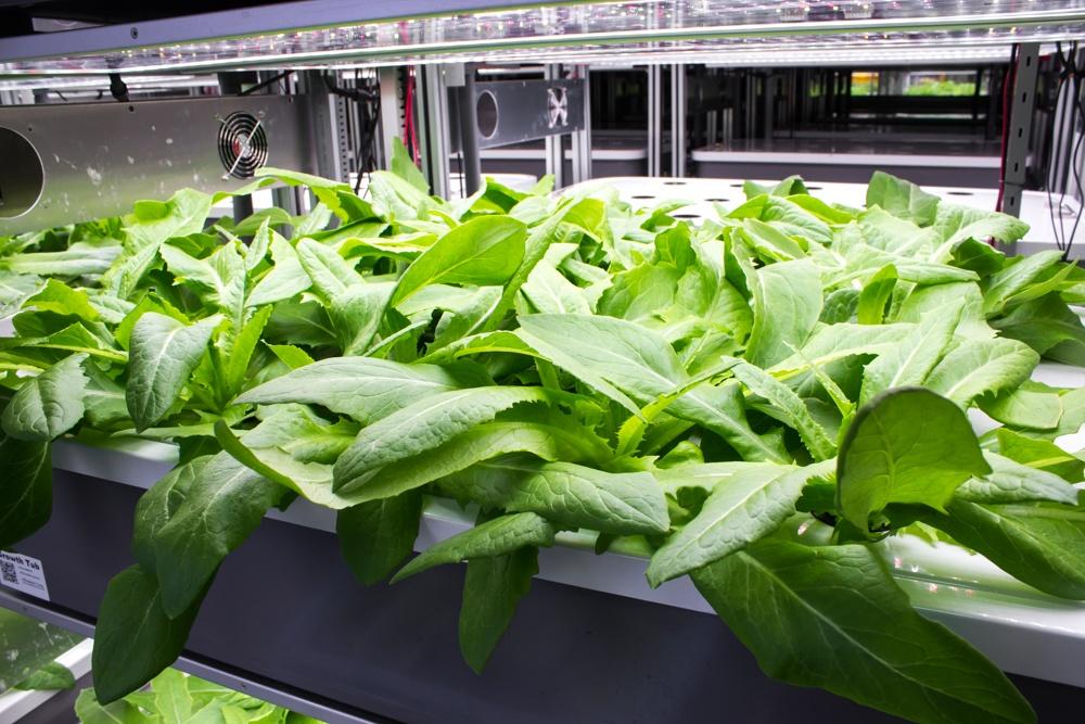 AEtrium Guardian Grow Manager Vegetables