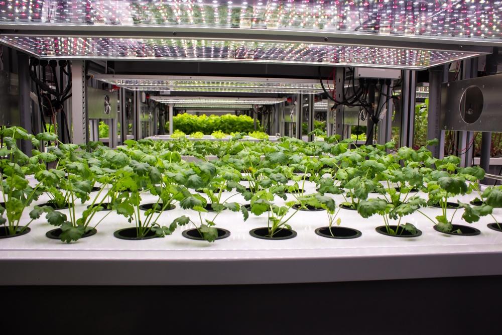 Fresh Produce AEtrium-2 Vegetables Growing