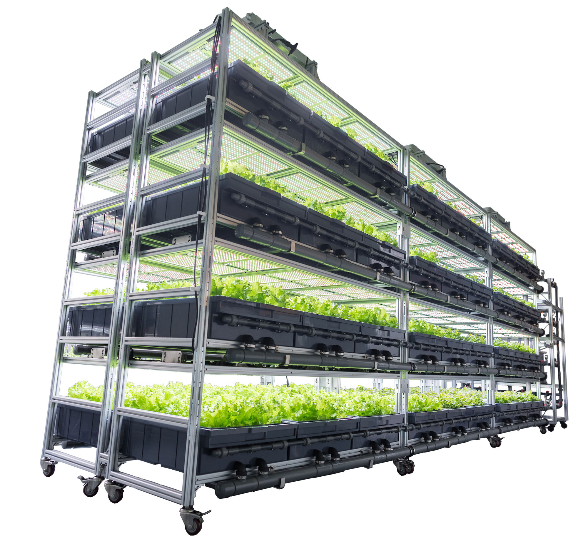 AEtrium SmartFarm with Lettuce