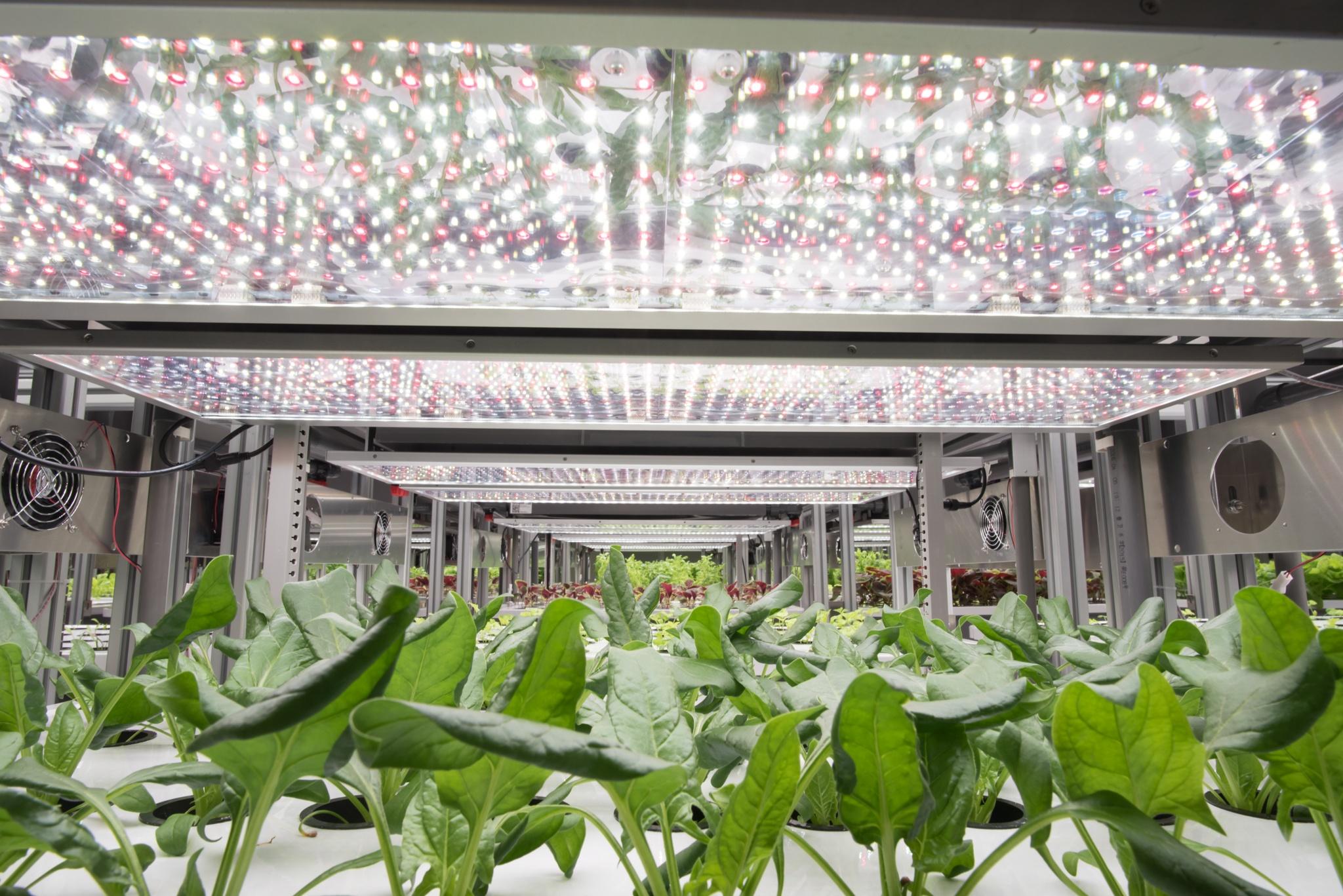 AessenseGrows Fresh AEtrium-2 Vegetable Growth