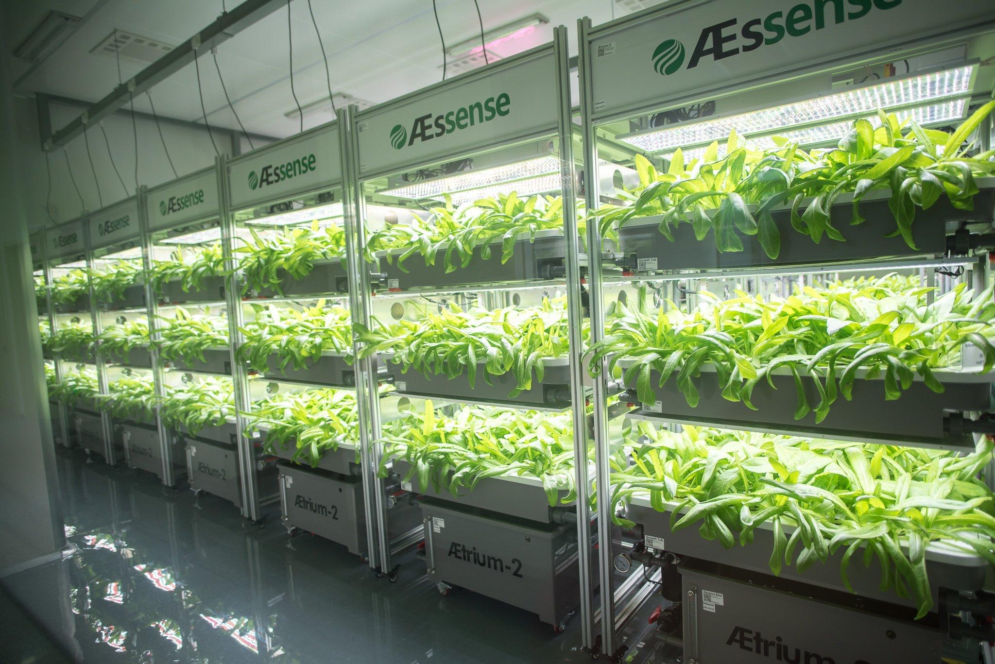 AEssenseGrows Fresh AEtrium-2 Growth