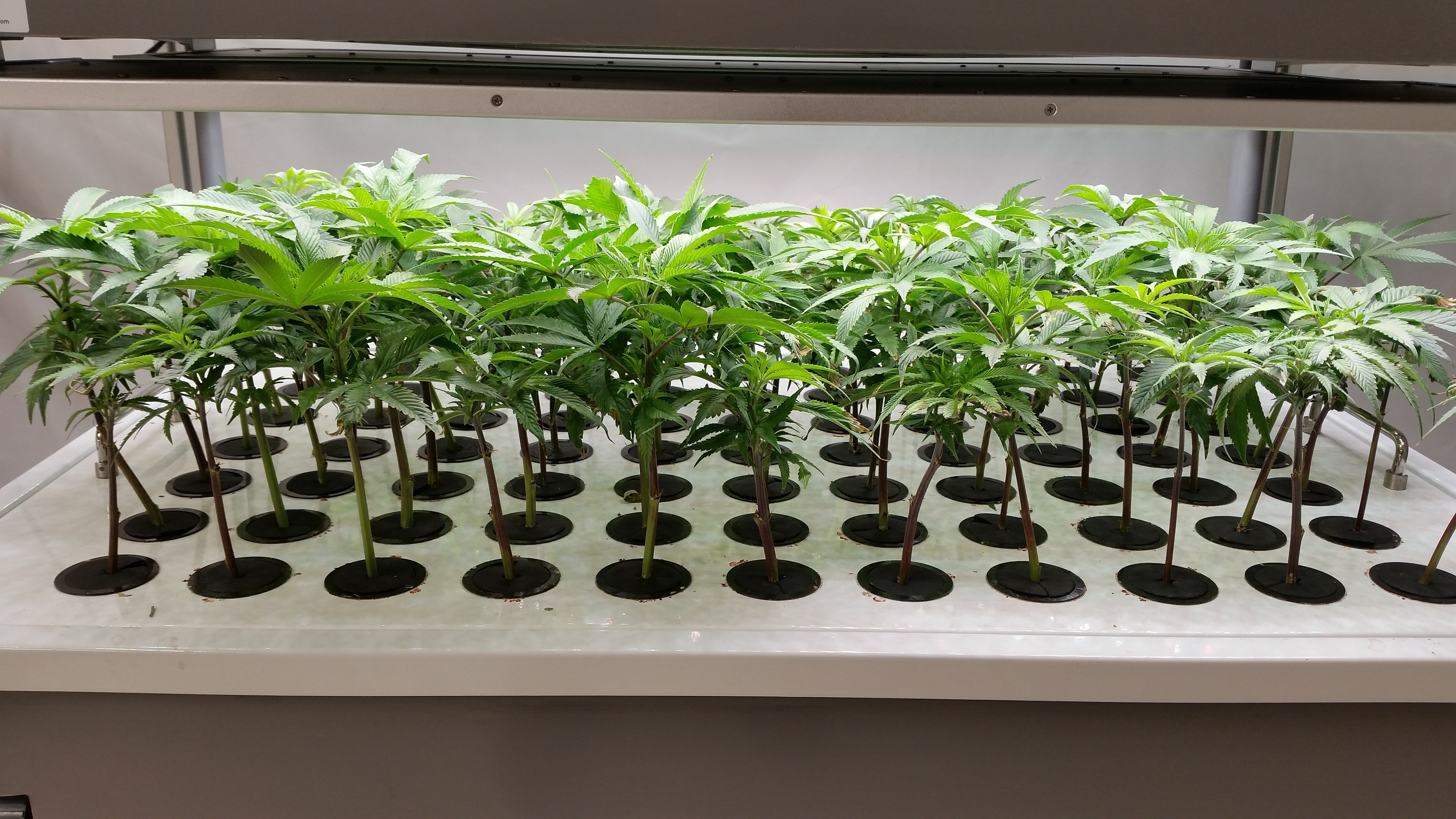 AEtrium-2 Clones Ready For Transfer