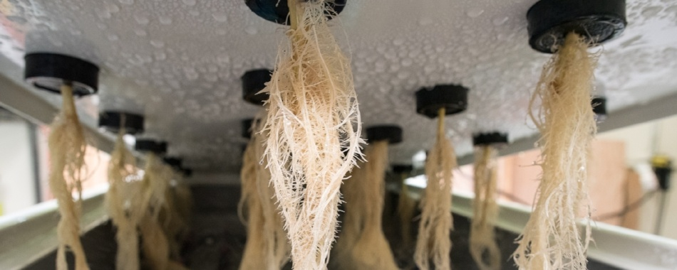 AEtrium-2 Clone Roots in Air with Aeroponic Irrigation