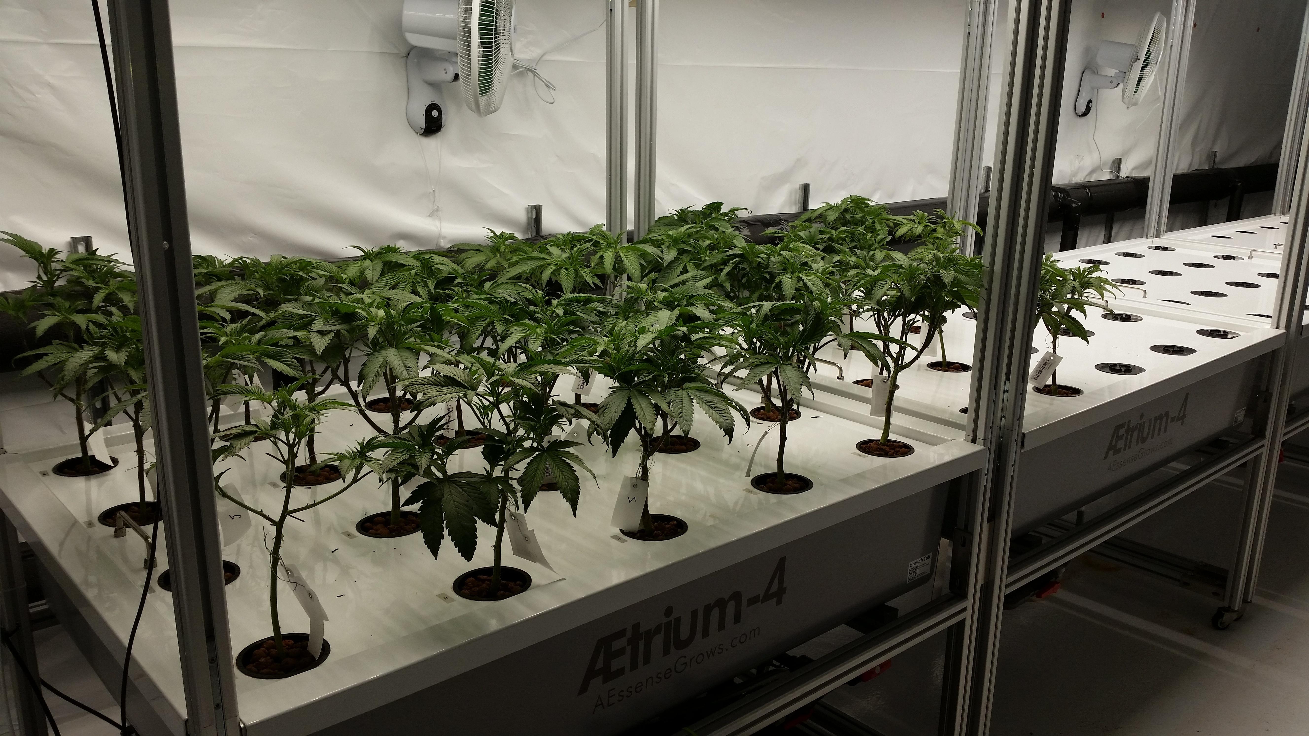 Bloom Room Production in AEtrium-4