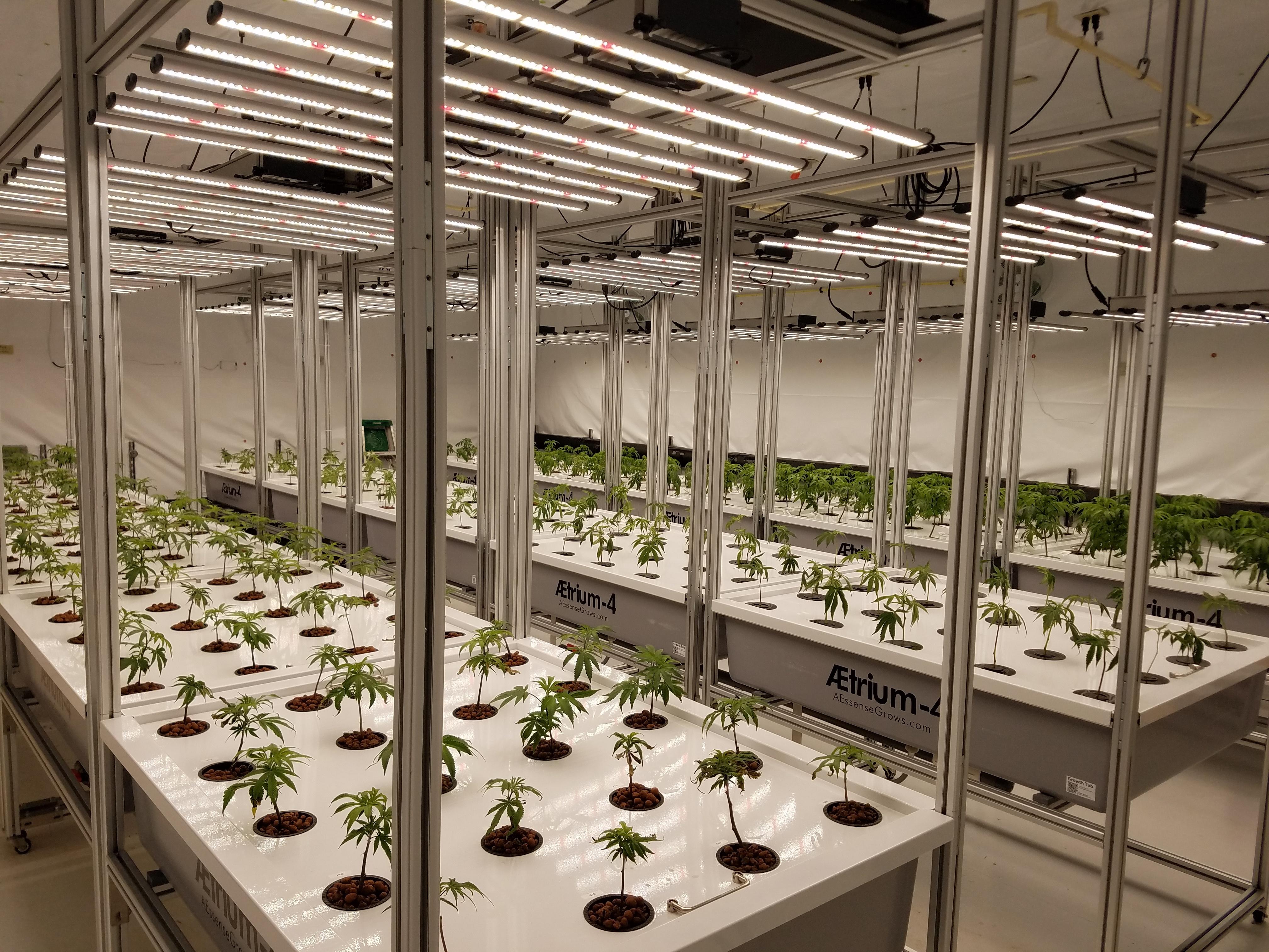AessenseGrows Cultivation AEtrium-4 Veg To Bloom Prep