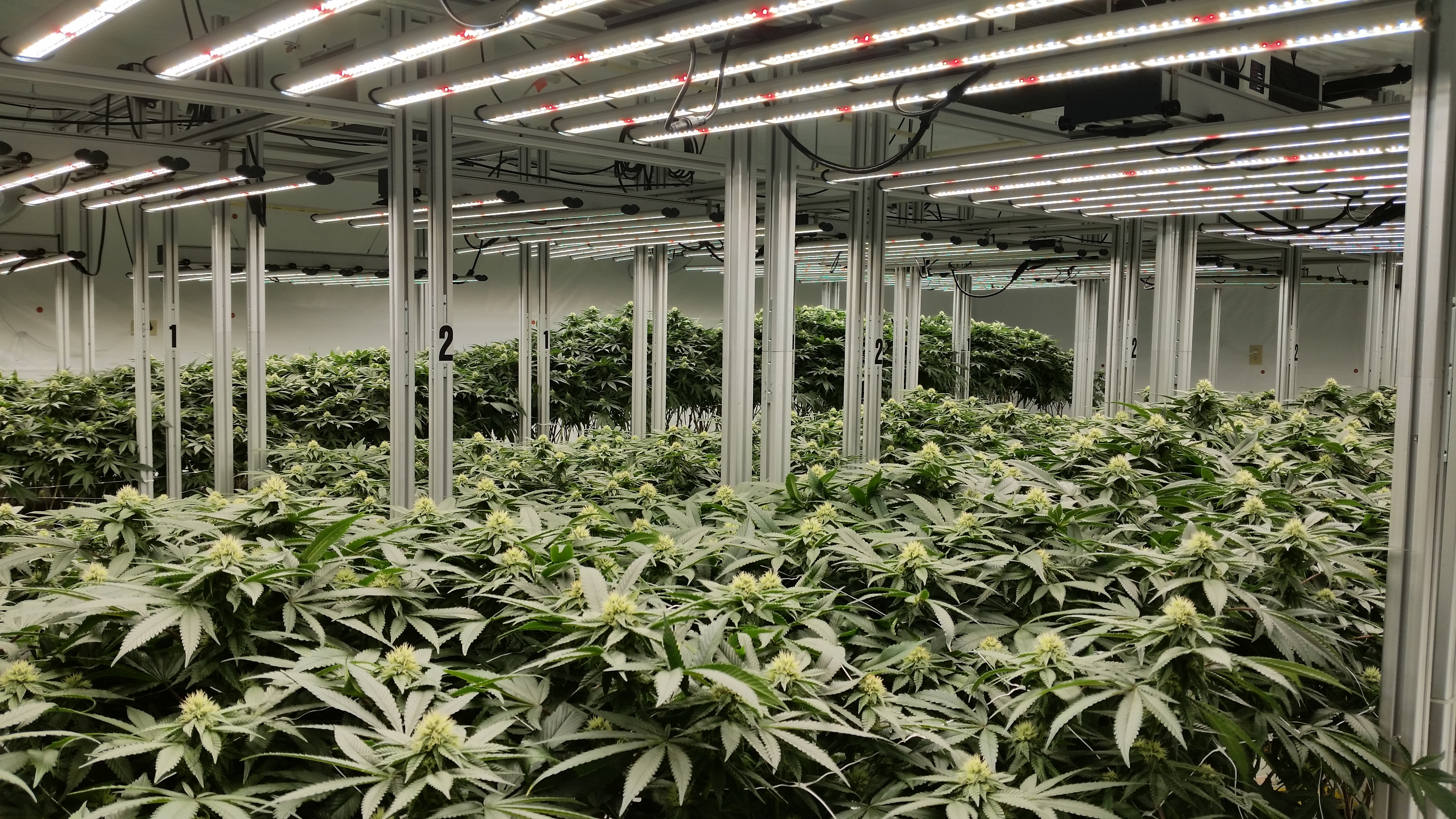 Cultivation Grow Room
