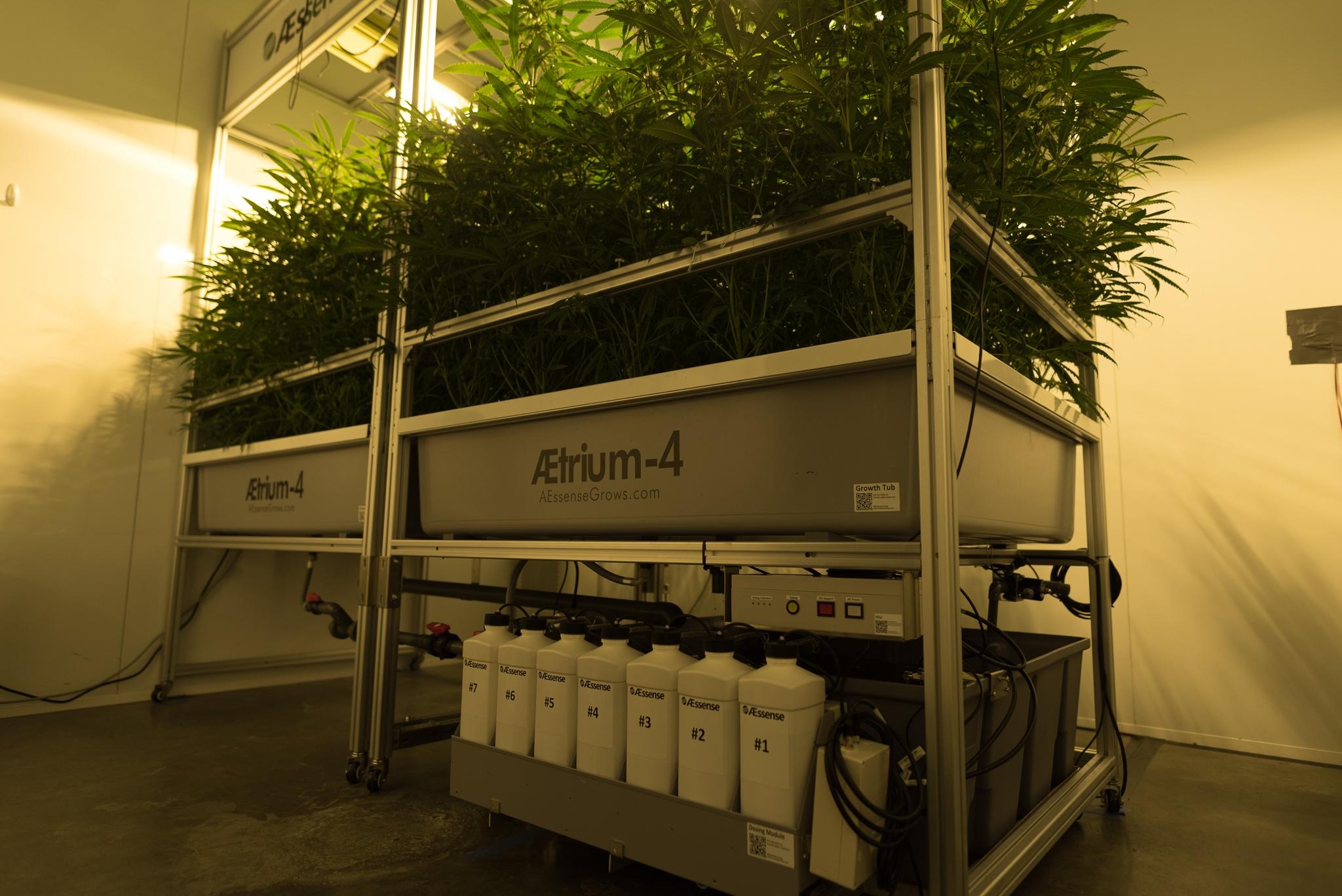 AessenseGrows Cultivation AEtrium-4 Test Kitchen Growth
