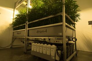 AessenseGrows Cultivation AEtrium-4 Test Kitchen Growth
