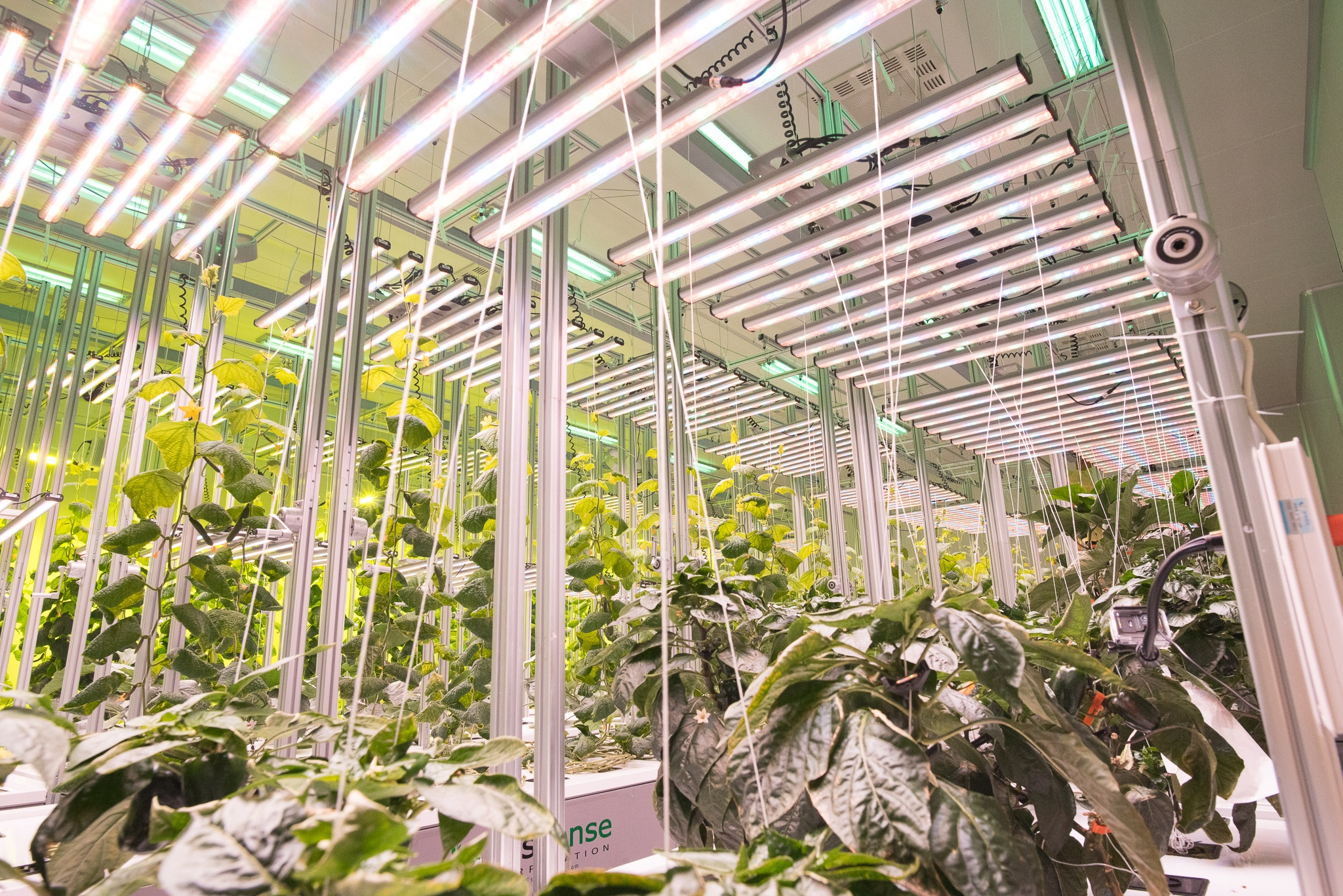 Automated Growth Possible In Fresh AEtrium-4 with Guardian Grow Manager