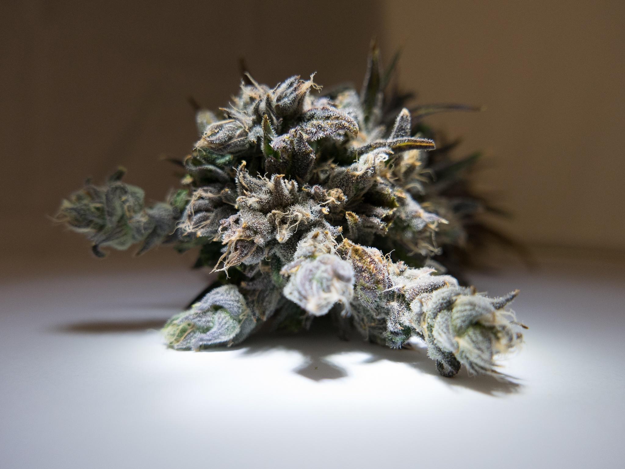 AessenseGrows Cultivation AEtrium-4 Test Kitchen Bud