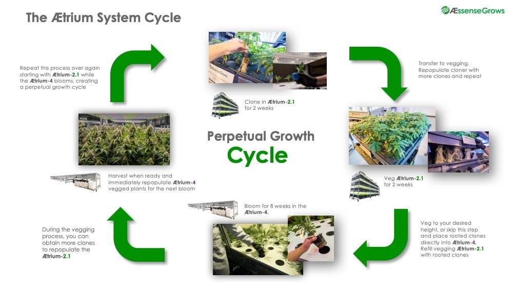 AEtrium System Grow Cycle