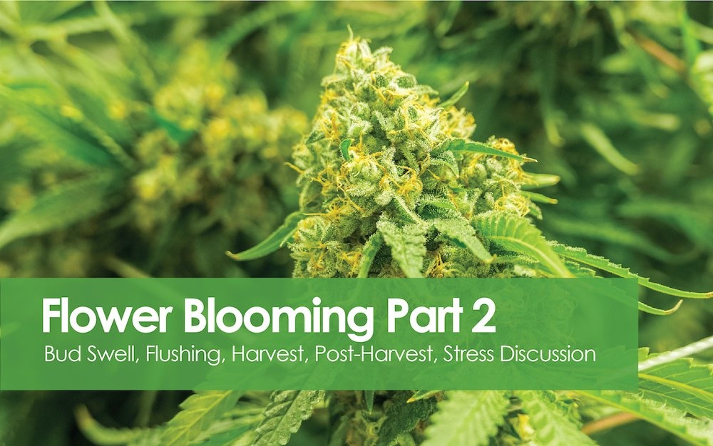 Flowering Blooming - Bud Swell to Post Harvest