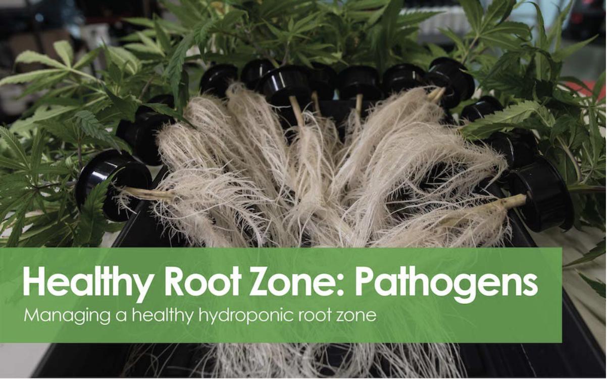 Healthy Root Zone - Pathogens