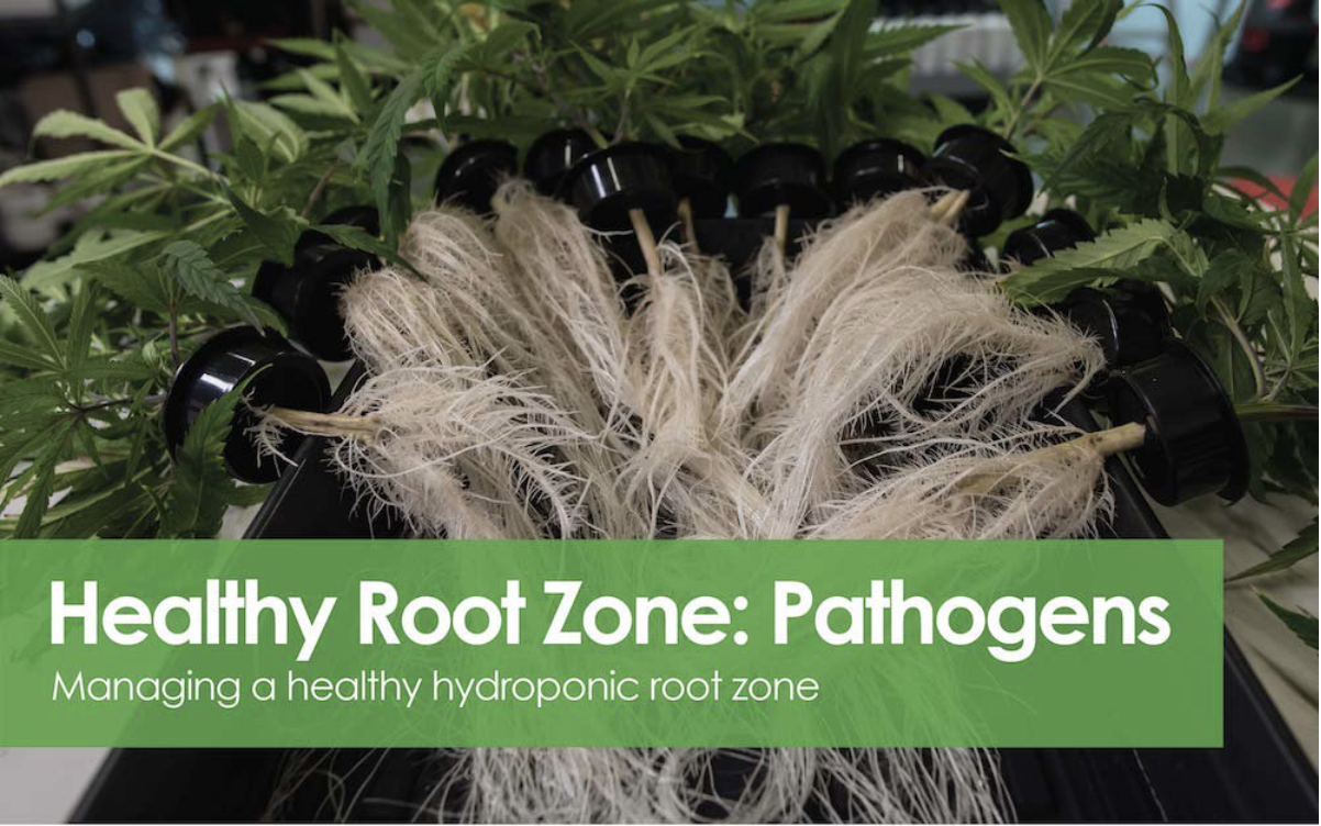 Healthy Root Zone - Pathogens