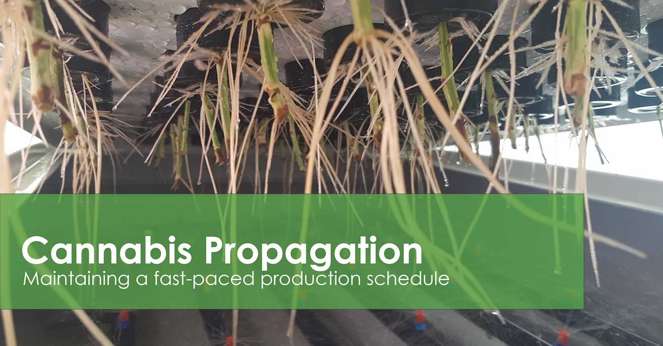 Learn about plant propagation