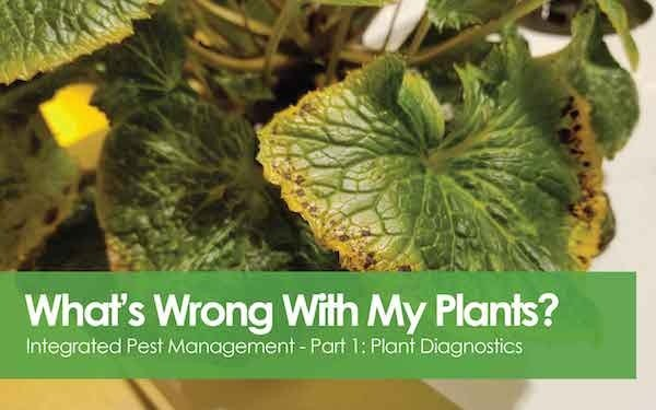Integrated Pest Management - Part 1 - What's wrong with my plants?