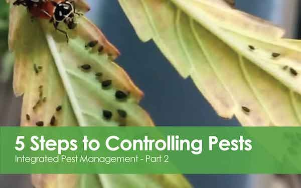 Integrated Pest Management - 5 Steps to Controlling Pests