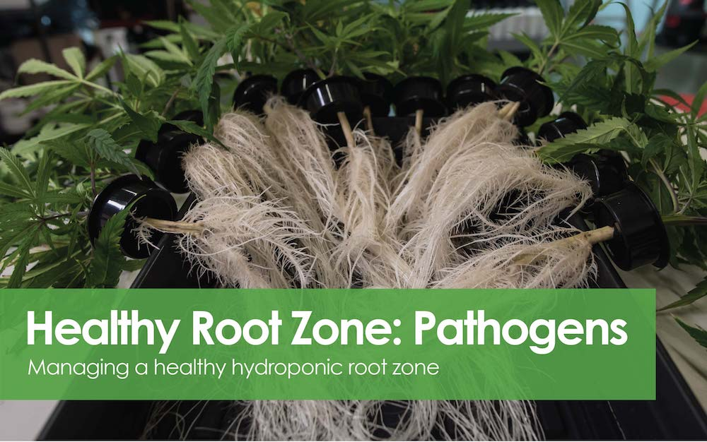 Healthy Root Zone - Pathogens.jpg