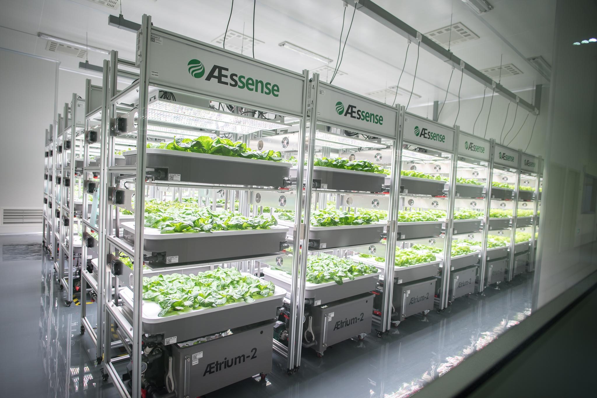 AE2 Machine Rows with plants-5.jpg